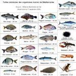 90 poissons méditerranéens