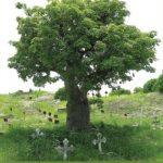 Boucar Diouf - Rendez à ces arbres ce qui appartient a ces arbres