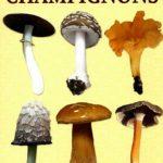 Livre le petit guide des champignons - Esi Editions