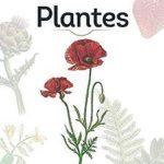 Plantes (specimen)